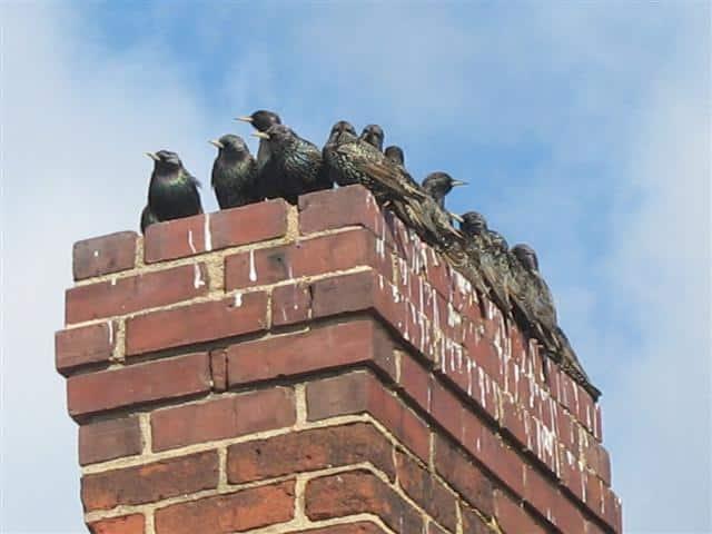 Chimney birds! What should I do??